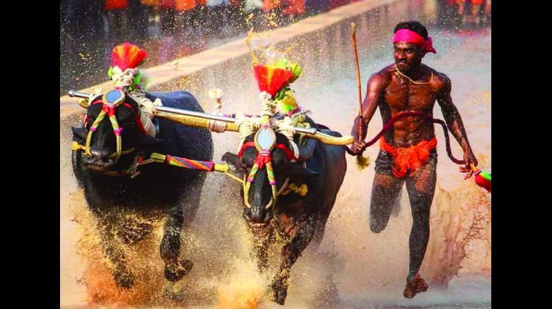Srinivas Gowda shot to fame after his record-breaking run at a Kambala race in Karnataka .