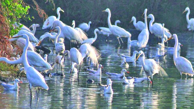 Many water birds use the Seawoods wetland. (Photo: Pawan Sahu)