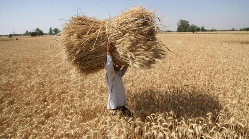 The amount, to be transferred to farmers bank accounts, will vary from state to state.  (Photo: PTI/File)