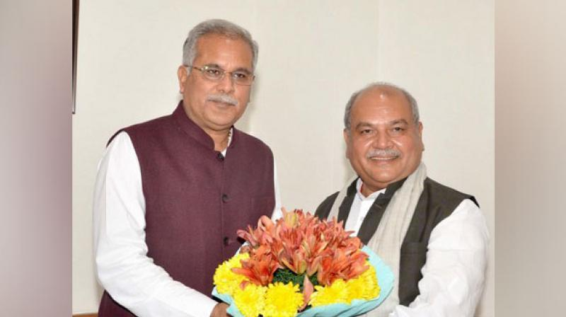 Chhatisgarh CM Bhupesh Baghel and Umiom Agriculture minister, Narendra Singh Tomar of Chhattisgarh Government have requested Prime Minister to slacken the provision for the year 2019-20 as well and procure 32 lakh metric tons of rice from Chhattisgarh, because a large quantity of inflow of paddy is expected this year. (Photo: File) (Photo: File)