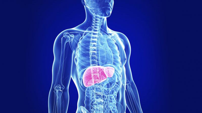 A fatty liver weakens and causes harmful effects on the body.