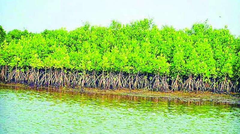 PAWS has said around 2,000 mangroves have been chopped in Gorai and Charkop.
