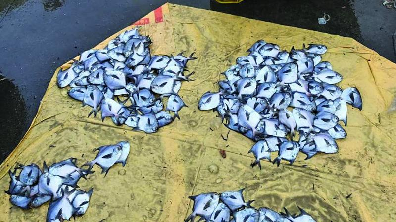 Small-sized pomfrets at a fish market.