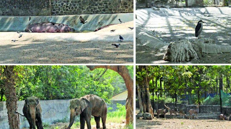 The decision was taken after the Central Zoo Authority (CZA) issued directives earlier this year to install CCTV cameras for the effective monitoring, storage, preparation and distribution of food prepared for animals. (Photo: Debasish Dey)