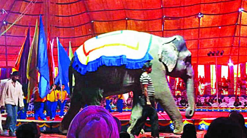 File photo of an elephant at Gemini Circus.