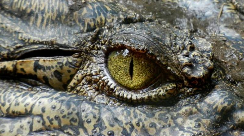 It marks the second crocodile attack in Palawan in less than a month. (Photo: Pixabay)