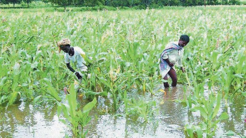 Weak monsoon and low reservoir levels are likely to impact demand for fertilisers in second half of this financial year.