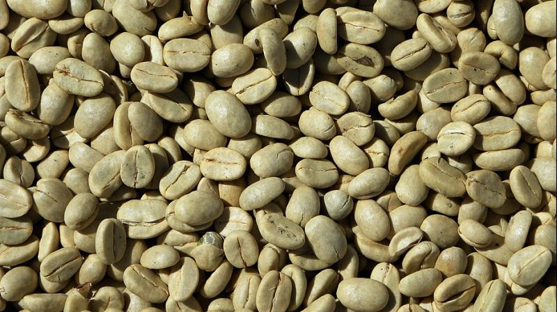 A Norwegian study, published more than a decade ago, delved into the benefits of green coffee bean extract. (Photo: Pixabay)