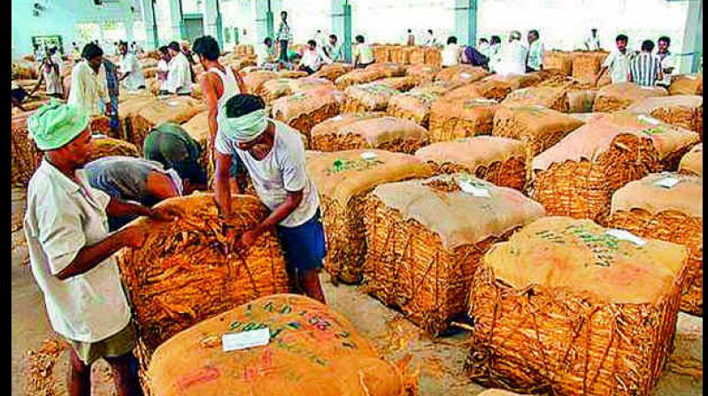 Tobacco contributes a major percentage of the total value of commercial crops in India generating huge socio- economic benefits in terms of agricultural employment, farm incomes, revenue generation and foreign exchange earnings. (Photo: File)