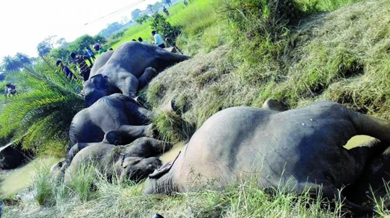Since May 2017, 121 wild elephants have died in Odisha. Out of these, 25 were electrocuted and 4 died after they fell into wells.