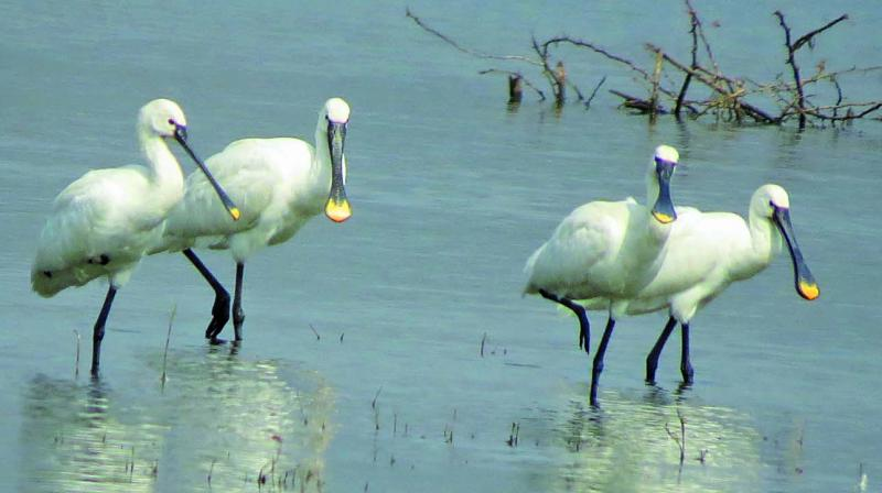 Five IUCN-listed endangered birds were also sighted at the 308-hectare of reserve forest located on the suburbs of the national capital.