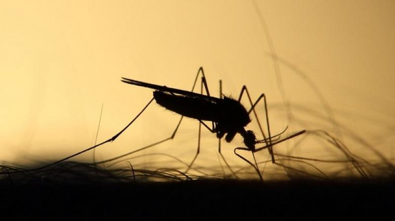The team found that the modified pantothenamide molecules not only interfere with the development of the malaria parasite during its asexual growth phase. (Photo: Representational/Pixabay)