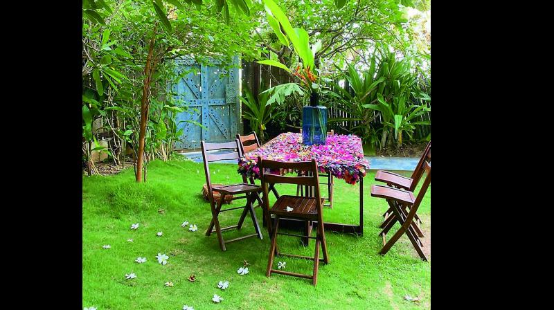 A picture of Twinkle's garden, which she posted on her Insta handle.
