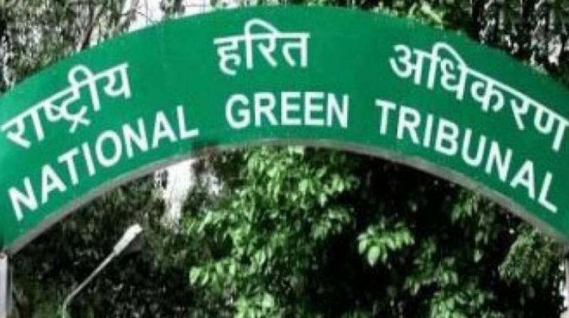National Green Tribunal. (Photo: PTI)