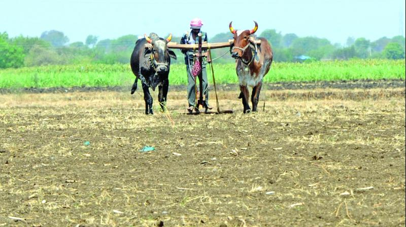 On the alleged suicide of Bargarh district farmer Brunda Sahoo, the minister said an investigation was required to know the reason behind his death.