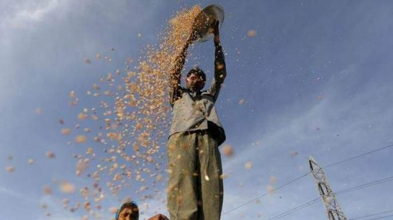 Deputy chief minister Manish Sisodia on Tuesday announced an allocation of Rs 100 crore for providing Minimum Support Price (MSP) to farmers as recommended by the Swaminathan Commission.(Photo: PTI)