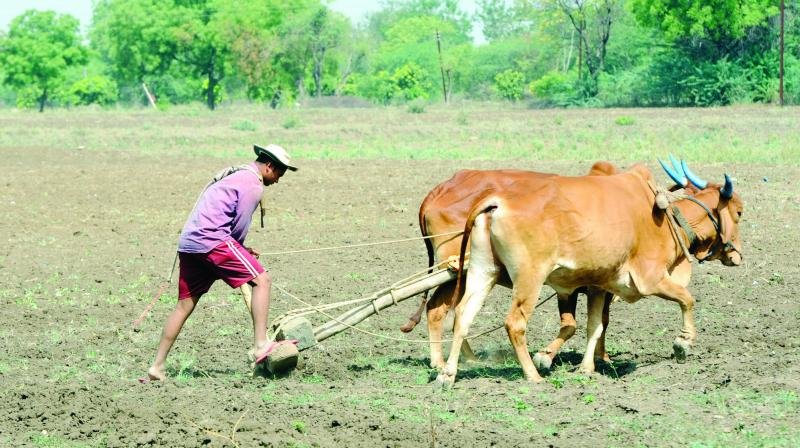 The AIKSCC, an umbrella forum of farmers, will also organise 'Kisan Mukti Sansad' or farmer's parliament at the venue of their protest. (Photo: File)