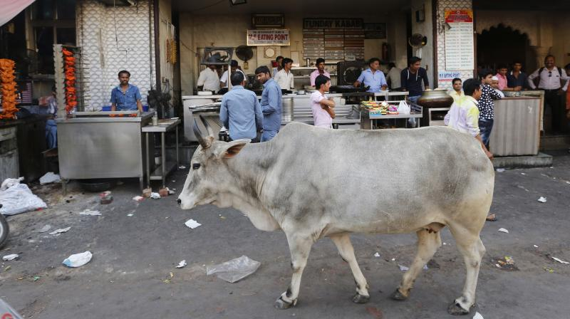 According to his complaint, the incident took place at about 7.15 pm. He was on his way to Sadar Bazar from Lahori Gate. As he reached the Sherawali Market, a cow hit his two-wheeler from the rear. (Photo: AP)