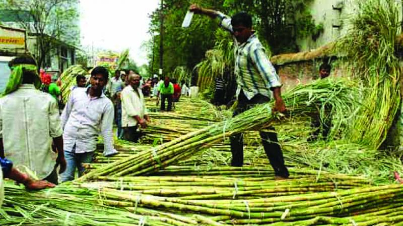 The sugarcane crushing season for 2019-20 would begin from November 22, governor Bhagat Singh Koshyari said on Tuesday after holding a meeting with the sugar commissioner and MSC Bank administrator at Raj Bhavan.