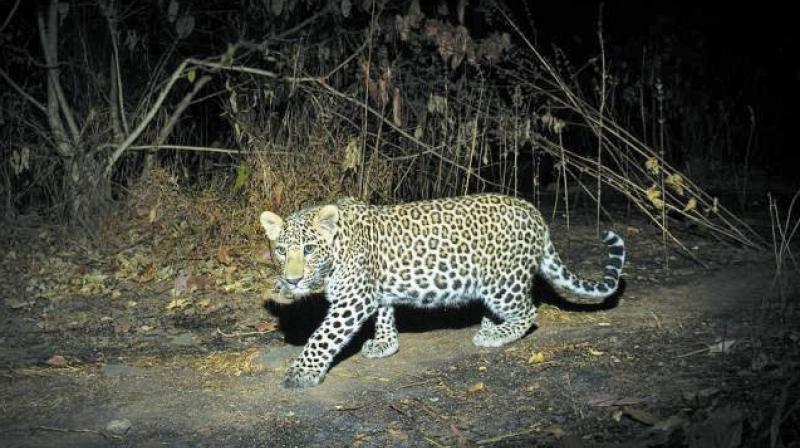 Forest officials have launched an operation to track the animal.