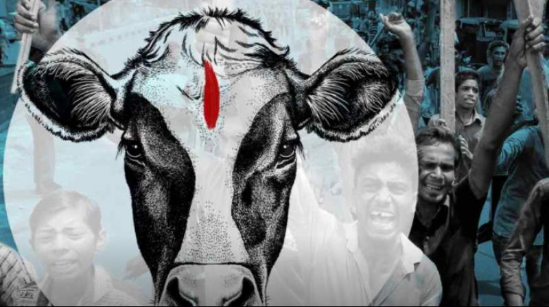 The two cows recovered from the victim were seemed to be the police's priority. (Photo ;PTI   Representational)