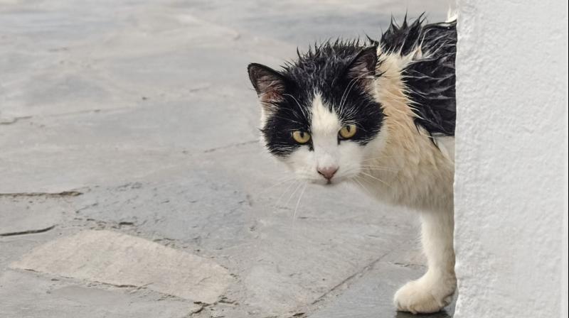 In 2007 Jenn Thompson's cat, Pilot, left the family's old home never to return again. (Representational Imgae/ Pixabay)