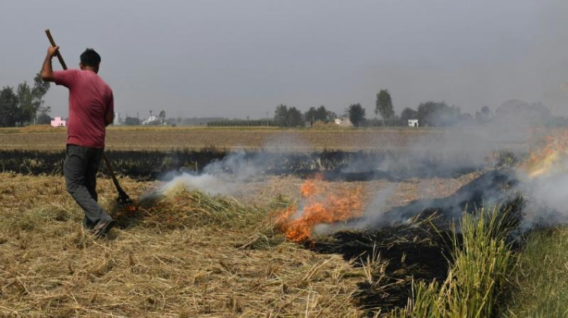 The scourge is compounded as farmers -- rushing to ready their fields for next season's wheat crop -- use fire to quickly and cheaply clear their land. (Photo: AFP)