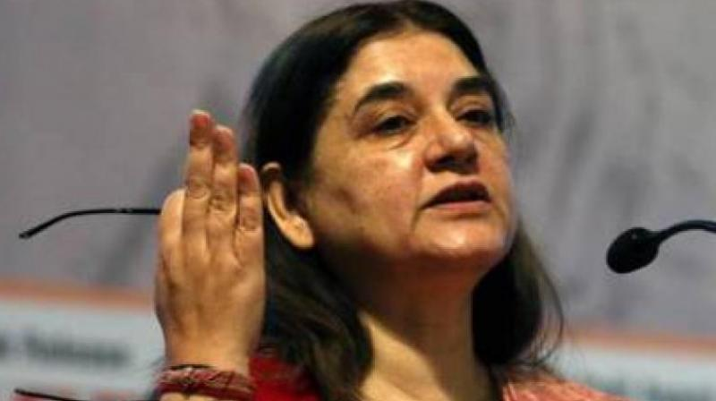 Maneka Gandhi (Photo: PTI)