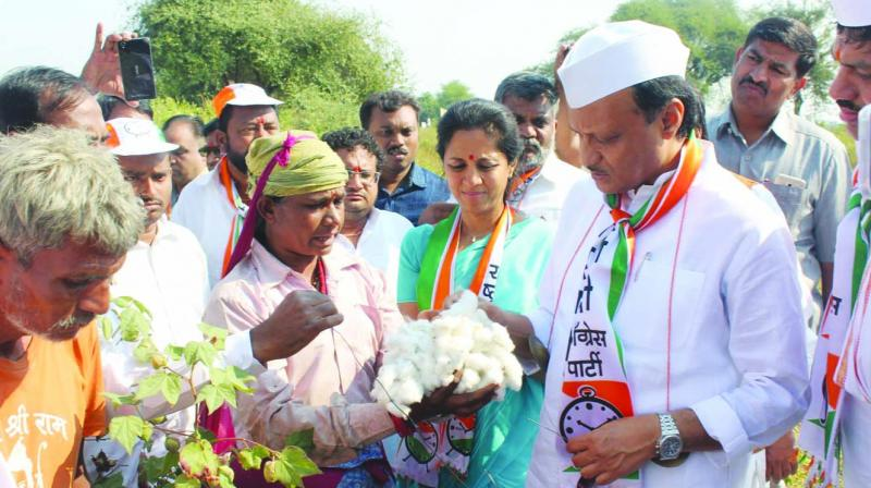 Distressed cotton farmers from Yavatmal met NCP leader Ajit Pawar on Wednesday.