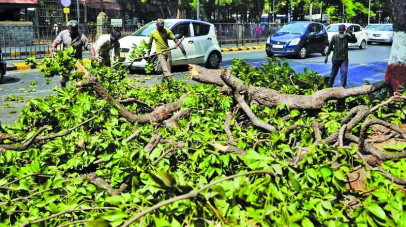 Around 500 trees will be axed between Worli and Marine Drive for the same project.