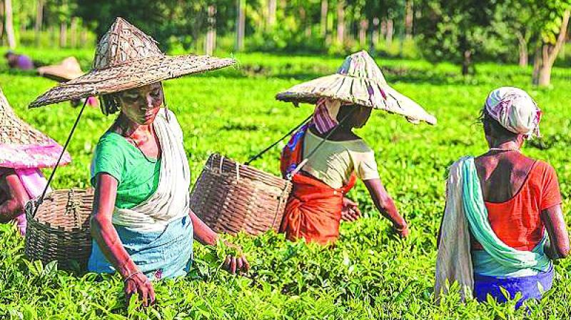 Iran imports Assam orthodox tea and the price of this variety has gone up by Rs 30 to 35 per kg in recent auctions in Kolkata.