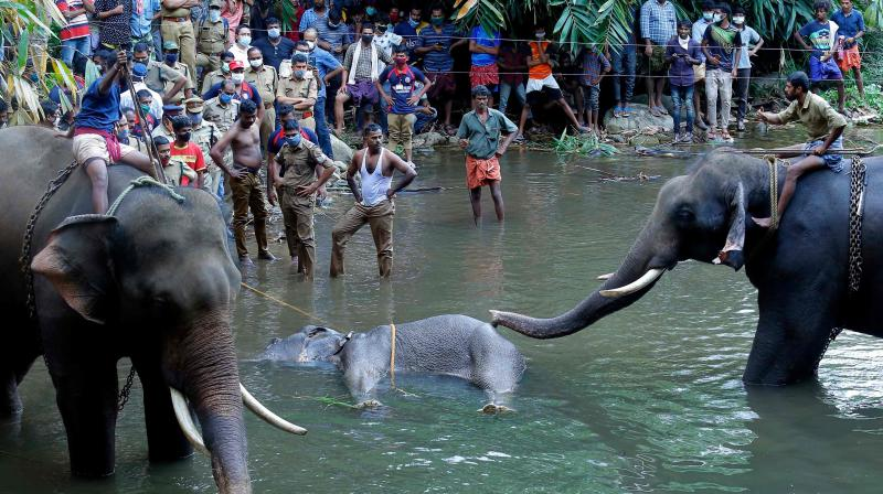 In this file photo taken on May 27, 2020 policemen and onlookers stand near a dead pregnant wild elephant retrieved after it strayed into a village and ate an explosive-filled fruit, on the banks of the Velliyar River in Palakkad district of Kerala state. AFP Photo