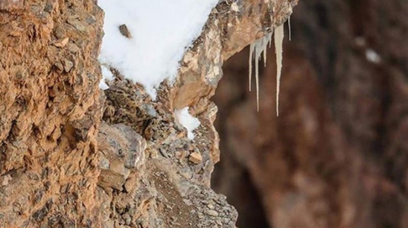 The photograph posted by Saurabh Desai of a camouflaged snow leopard recently went viral. (Photo: Instagram I Saurabh Desai)