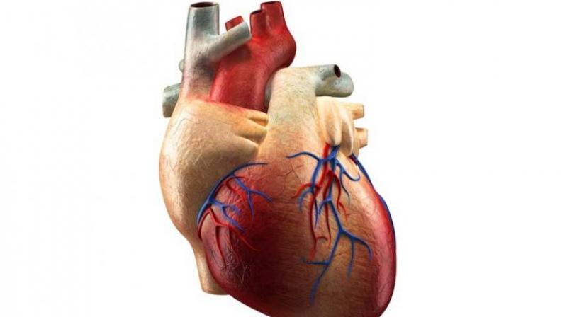 Heart failure occurs when the heart is unable to pump sufficiently to meet the oxygen and nutrient requirements of vital organs of the body.