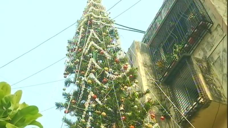 A Mumbai's family grew 65 feet tall Christmas tree in their backyard in Worli, said to be India's tallest. (Photo: ANI | Twitter)