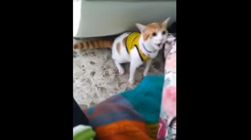 The clip shows the white and brown pet mimicking its owner's excitement during a World Cup clash. (Youtube Screengrab/ Estefano)