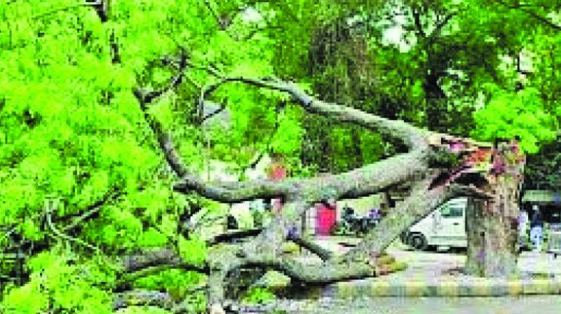 The tender costs Rs 90 crore and includes 23 contractors for tree trimming/cutting across Mumbai for the next two years. (Representational image)
