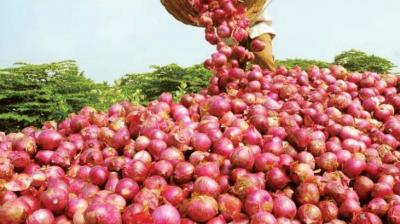 Govt to take steps to promote agri commodity exports: Jaitley