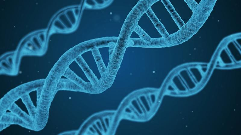 While existing biotechnology is already used to make medicines like insulin and genetically modified crops, synthesizing whole genes or genomes gives an opportunity for far more extensive changes.