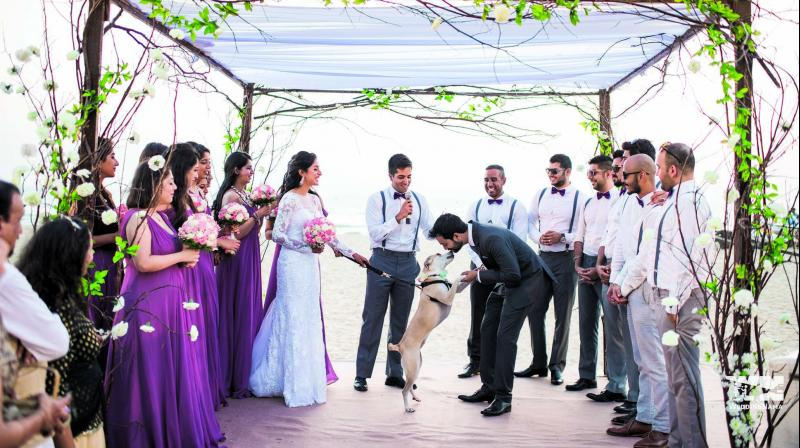 Mitali Salvi and Ali Shakeer at the wedding ceremony with Panty as the ring bearer. (All photos: WeddingNama)
