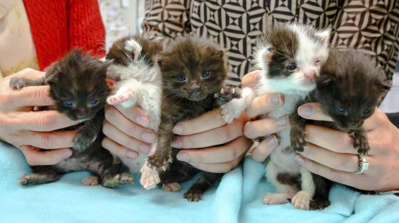 The San Diego Humane Society says the kittens somehow wound up inside a 60-foot steel column that was trucked from Hayward in the San Francisco Bay Area to San Diego. (Photo: AP)