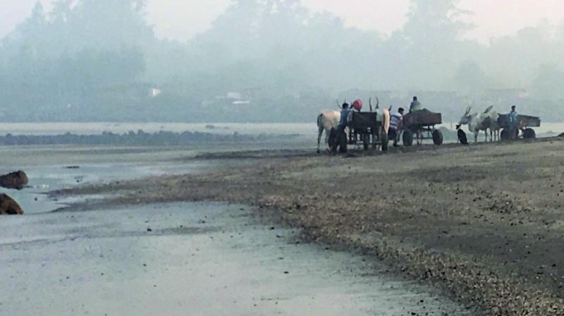 Bullock carts at Kihim beach illegally carting sand from Kihim beach.