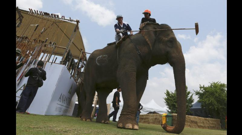 King's Cup Elephant Polo tournament raises funds for projects that better lives of Thailand's wild and domesticated elephant population.(Photos: AP)