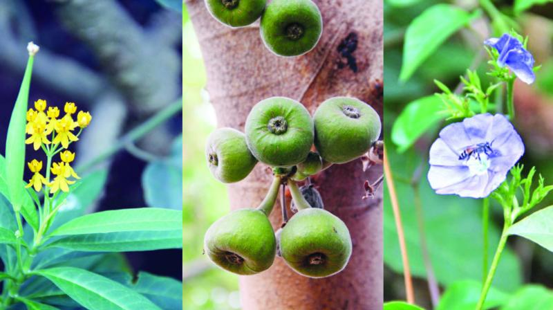 Over The Garden Walk: 'Tree Walk' Over Thane Botanical Garden