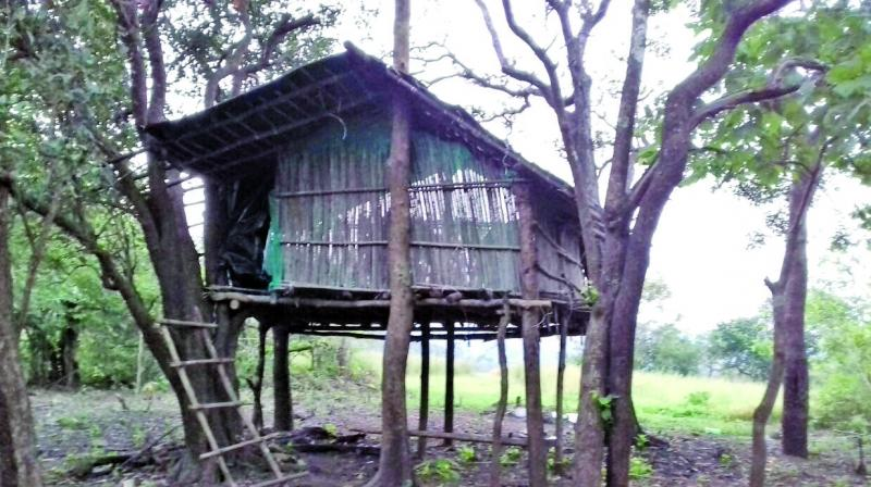 Huts have been set up at three spots in and around the national park.