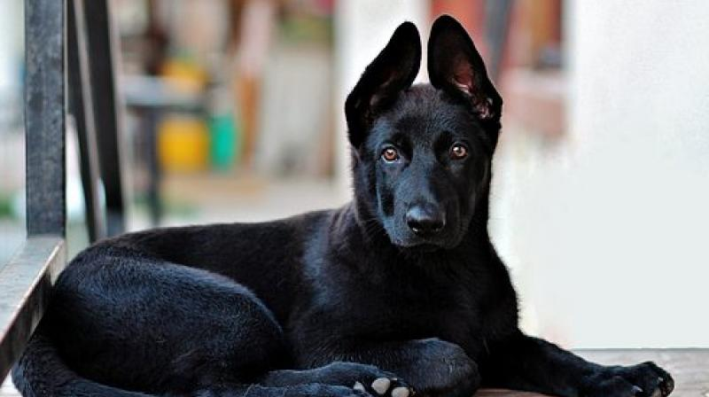 Dovey, the dog is on the mend and has already gone home. (Photo: Pixabay)