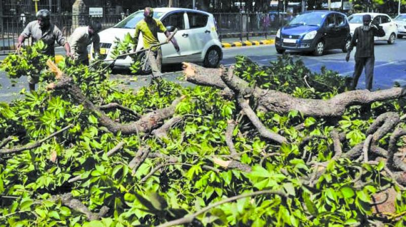 The activists had approached the court against depletion of green cover and asked for shifting of the car shed to Kanjurmarg.