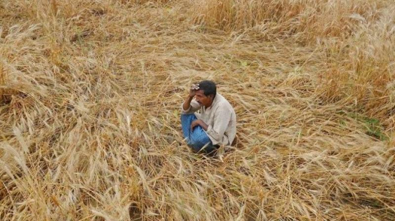 111 farmers have committed suicide across Chhattisgarh between 2016 and June 30, 2017, Chhattisgarh revenue minister said. (Photo: PTI)