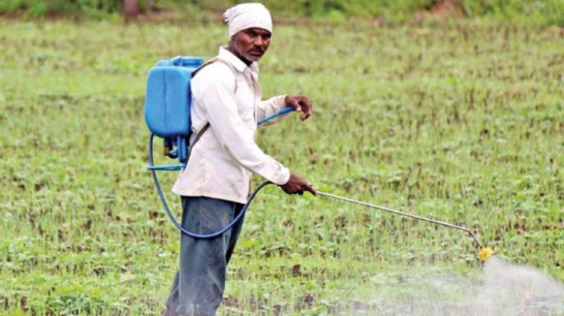 GST rate for crop protection products needs to be reassessed and reduced from 18 per cent to the lowest denominator possible. (Representational image)