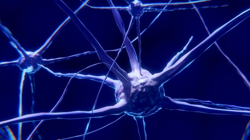 The study scanned for accumulation of tau tangles in the entorhinal cortex area of the brains of the participants, which helps in managing memory, navigation and perception of time. (Photo: Representational/Pixabay)